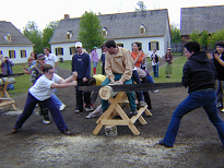 Team log sawing contest with two boys using lumberjack long historic saw as friends watch on